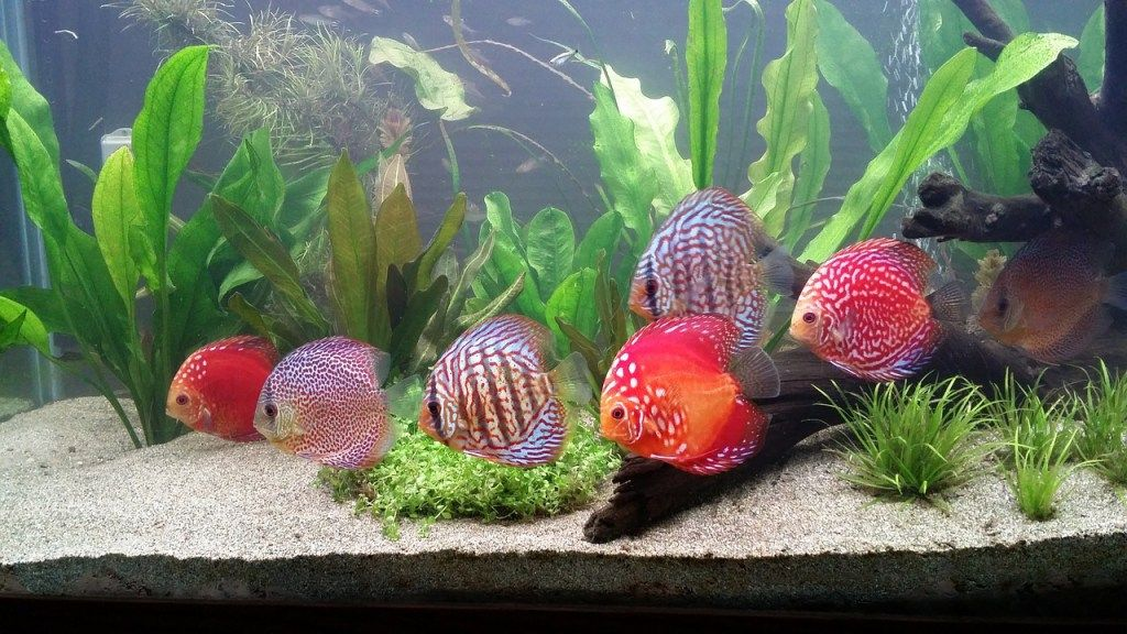 Having an Aquarium at Home: Everything You Need to Know